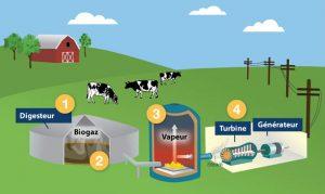electricite-biogaz